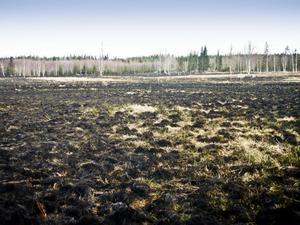 Räddningstjänsten uppskattar att 12 hektar mark förstördes i branden.
