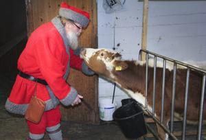 Gårdstomten är vän med alla djuren. Bergsjötomten kommer att bli en välkommen gäst i stallet.