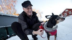 Nyårstips. Hundpsykologen Anders Hallgren med Macho (9-årig blandning av pinscher och chihuahua) ger bland annat tipset att stoppa fetvadd i öronen på hunden när det börjar smälla.