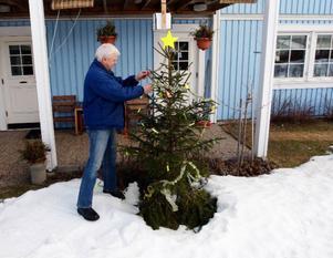 Kanske inte rätt årstid att pyssla med julgranen, men Sten Lindqvist från Krokom har kvar sin gran för att prova olika fluorescerande ljussorter. Ovanför granen syns UV-lampan som lyser ner på ljusen.Foto: Jan Andersson