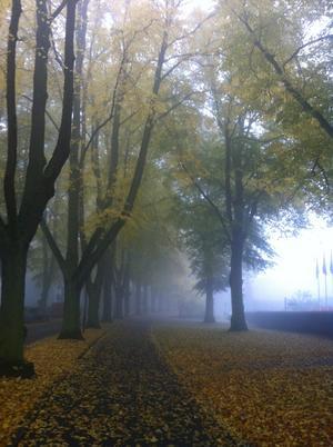 Bilden tagen under höstpromenad i ett dimmigt Kalmar.