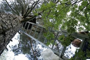 Henry Pollack tar stegen upp till kattuggleholken.