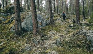 Vändåtbergets vackra naturreservat.