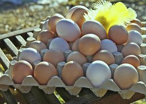 Utan ägg blir det inte mycket till påskfirande.