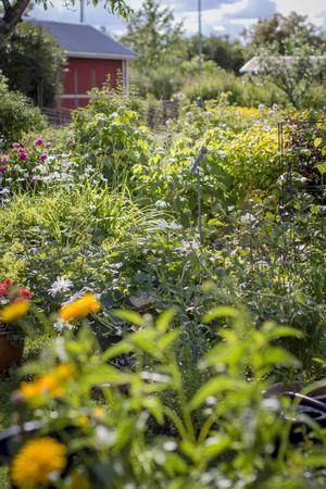 På Anette Stens trädgård är det fullt av växtlighet.