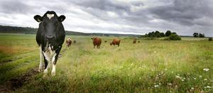 Just nu är stora delar av svensk mjölkproduktion på väg att slås ut. Vi föreslår därför att regeringen omgående inför en beredskapspeng per mjölkko, skriver sju företrädare för Landsbygdspartiet oberoende.