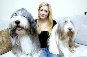 En nordisk vinnare. Matilda Sandberg hemma i soffan med Florian och Cleo, bearded collies