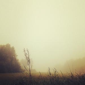 Sänder en bild från Väddö med dimman som var magiskt förtrollande! Foto: Susanne Rehnfeldt
