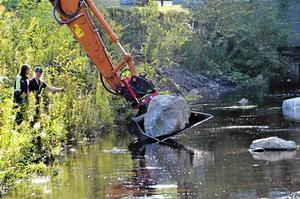 För öringen. Till projekts första etapp hör att lägga i stora stenar i ån, för att underlätta för öringens liv och fortplantning. Foto: Thomas Eriksson