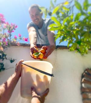 David plockar persikor till matlagningen.