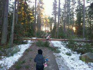 Träd ligger över cykelvägen vid Källberget i Leksand.