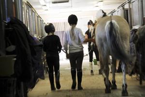 Många ridskolor får betala flera tusen kronor när de tvingas registrera om hästar som har utländska pass.