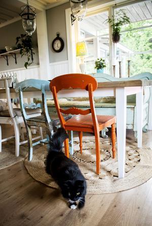 Matgruppen har långsamt vuxit fram med udda möbler.