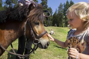 Ponnyridning och närvaro mellan djur och barn.