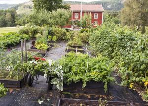 Trädgårdslandet rymmer ett trettiotal olika sålådor där grönsaker blandas med små plantor och försöksodlingar. Den svarta ogräsväven har legat synlig i över tio år, och klarar sin uppgift väl. Om det börjar gro något är det bara att plocka bort.