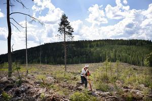 Att plantera skog är viktigt för skogsbruket och ett krävande arbete.