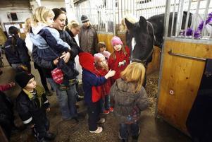 Hästen Four Seasons vill gärna hälsa på alla besökare och pussar de han kommer åt. - Han är stallets snällaste häst, säger Jojjo.