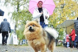 Internationellt värre. Beatrice Lama Lopez är brasilianare som bor i Trondheim och har fritidshus i Åre. På fredagen tog hon med sig sin lilla hund och kollade in höstmarknaden.