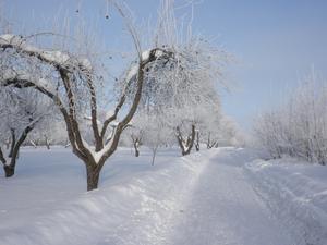 Vinterbild från min morgonpromenad. Äppelparken