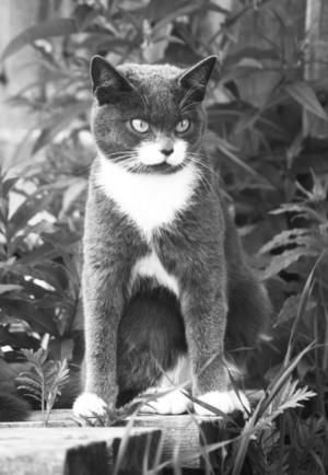 """GUNGSTOLEN ÄR LILLYS PLATS. """"Katten heter Lilly är född på Öhn och är nu chef på vår gård i Havsnäs. Hennes plats i vardagsrummet är framför braskaminen på gungstolen"""".Inskickad av Regina och Maikel Ahlf, Havsnäs."""