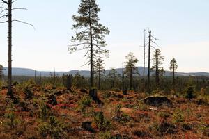 Bergvik skog står i startgroparna för att ansöka om miljötillstånd för ett 80-tal vindkraftverk i ett höglänt skogsområde fyra kilometer väster om Svabensverk. Vindkraftsprojektet Hälsingeskogen presenterades 2012.