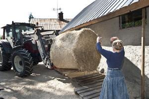 Marjo Marthin tar emot halmen som ska blandas med lera för att bli byggmaterial. Halmen skjutsas dit av ekomjölkbonden Lasse Holmström.
