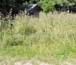 Det är oklart om byborna ideellt får röja vass och gräs vid badet. Till det behövs billstånd från markägaren Stora enso.