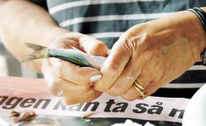 BILD: På returpappersbehållare (eller allra helst på fisk som rensas på tidningspapper).    TEXT: