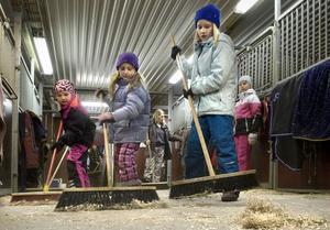 Amelie Eliasson, Felicia Hägglund och Ida Oksanen städar och håller rent i stallet.