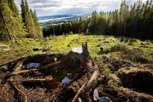 Det blir ingen skidåkning i Ladängen i vinter, projektet ligger efter i tidsplanen.  Foto: Ulrika Andersson
