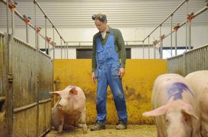 Uppfödare. Ludvig Nilsson driver grisgården i Spångboda tillsammans med sin bror. De har valt att specialisera sitt lantbruk på uppfödning av grisar.