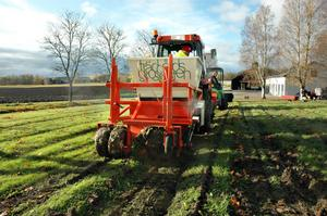 """Behövde draghjälp. Den speicalinhyrda röda traktorn, som skulle sätta alla de 70 000 lökarna, fick problem i det blöta gräset och fick lite draghjälp av Wij trädgårdars egen traktor. """"Det hade blivit väldigt väldigt jobbigt att sätta så många för hand"""" säger trädgårdsmästaren Frida Mörnerud med ett skratt medan hon noggrannt planerar i vilken ordning traktorn ska sätta lökarna."""