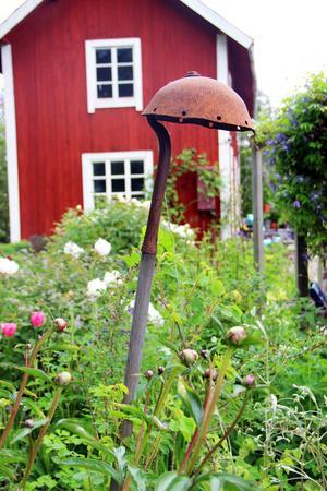 Ett rostigt verktyg från uthuset får fungera som stöd åt de klättrande klematisplantorna.