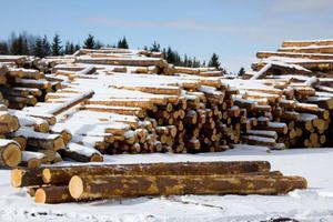 Rödins trä arbetar nästan uteslutande med att ta tillvara på de stormfällda träden runtom i länets skogar.