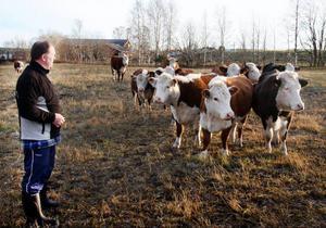 Vid sidan om köttdjursuppfödningen har Pelle Frisk även planer på att starta med mjölkkor eller bygga ett eget gårdsslakteri.