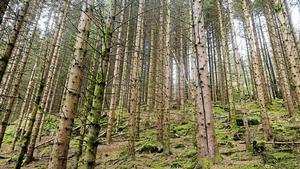 Skogsbranschen sysselsätter cirka 100000 personer i Sverige, vilket är ungefär lika många som bor i Sundsvall, skriver debattförfattarna.
