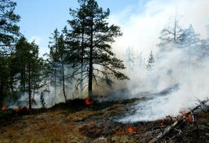 Ungefär 400 gånger 400 meter eldhärjades, men områdets storlek var svårbedömt i den oländiga terrängen.
