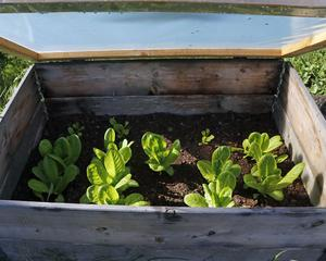 I drivbänkar finns grönsakerna.