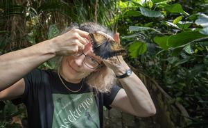 Anne Sverdrup-Thygeson har med sig kärleken till insekter från barndomen och insekterna. Under besöket på Fjärilshuset i Stockholm placerade sig en fjäril från Caligosläktet på hennes glasögon. Foto: Jessica Gow/TT