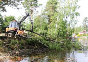 När träden dragits till maskinen kan de tas upp med hjälp av en maskin.