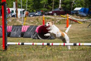 Trots värmen tog sig de flesta hundarna över de hinder som var utställda på banan.