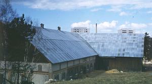En bild från Bilderboken på ladugården i Brunnsäng (man anar höghusen i bakgrunden). Gården är sedan länge riven.