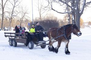 Hästen Paroll var populär. Många ville ta en tur bak i vagnen.