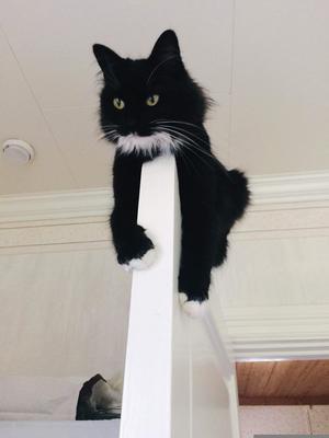 376) Vår kaxiga lilla kattfröken Mischa vill ha koll på allt! Foto: Karoline Olsson