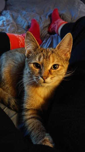 Katten Ester. Foto: Maja Lindvall