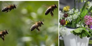 Kemikalier är ett av de stora hoten mot världens insekter. Och utan insekter blir det svårt att hitta sju sorters blommor, skriver Jytte Guteland, ledamot i Europaparlamentet (S).