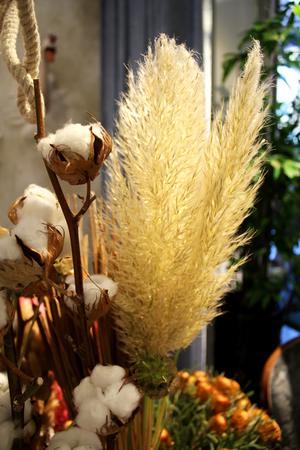 Pampasgräs är trendväxten nummer 1 just nu.