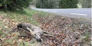 I Södertälje kommun inträffade 235 viltolyckor med rådjur 2018, i Nykvarns kommun 69.