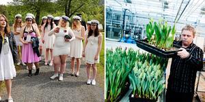 I  framtiden kan Nordviksskolans elever börja ta studenten med trädgårdsinriktning igen. Arkivfoto