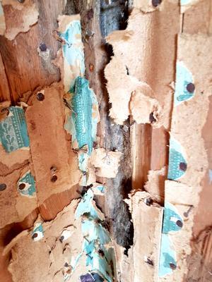 Tusentals små-nubb har de dragit ut från väggarna.